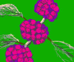 Close up of purple berry