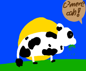 Cow named cah