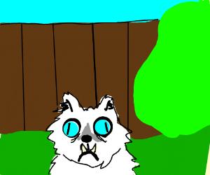 MA! THAT CAT'S IN THE YARD AGAIN!