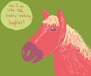 Horse asking a question