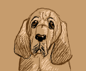 Blood hound(dog breed)