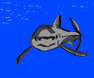 A smol scary shark