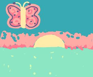 Butterflies watch the sun begin to rise