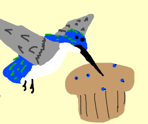 hummingbird likes muffin