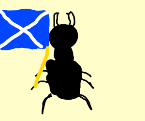 scottish beetle