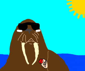 walrus in a sunny day
