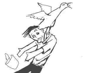 seagull kidnaps man