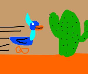 roadrunner slams into cactus