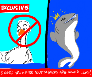 Geese are hated yet sharks are loved. Why?
