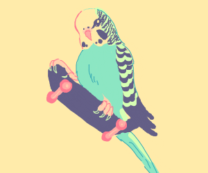 Skateboarding parakeet