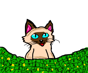 siamese cat with alot of dolars and coins
