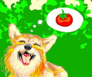 Dog likes tomatos