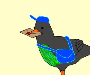 messageman pigeon
