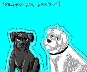 Draw your pet. Pass it on