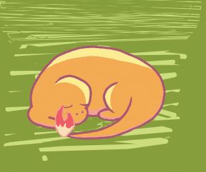 sleepy charmander