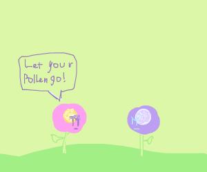 Flower begs to release pollen