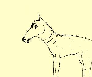 hairless horse. very bald.