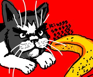 cat angry at a banna