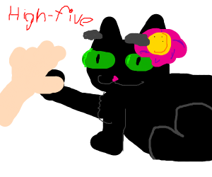 Cat high fives someone