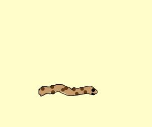 cookie worm