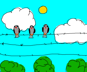 birds on a line