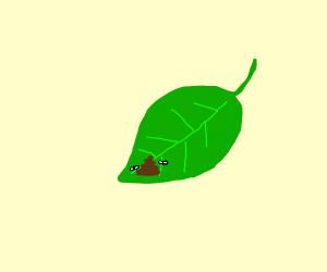poop on the leaves