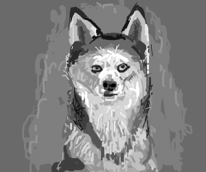 Rabid husky