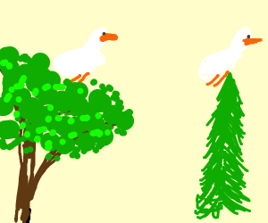 Goose in the Tree Tops