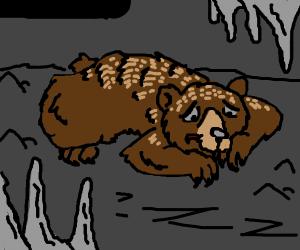 Sad Bear in a cave