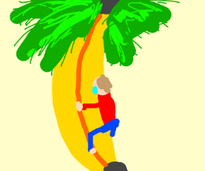 Climbing a palm tree with a banana