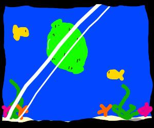 Lime in an Aquarium