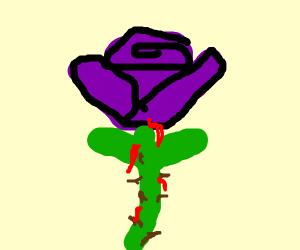 a purple rose that is bleeding
