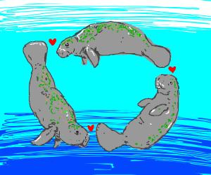 Love triangle with aquatic animals