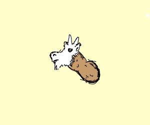 Peanut crossed with Goat