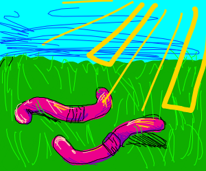 Two worms on a sunny day
