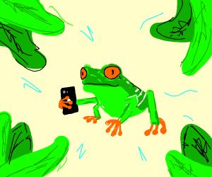 Frog checks his phone