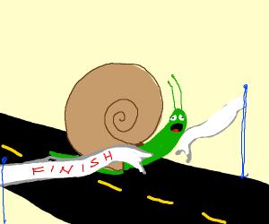 snail won a race