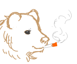 Bear smoking