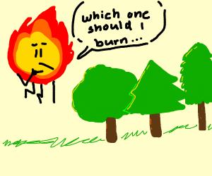 fire choosing a tree to burn
