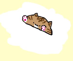 Tabby BOngo Cat
