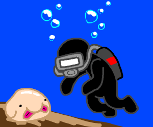 diver finds a blob fish