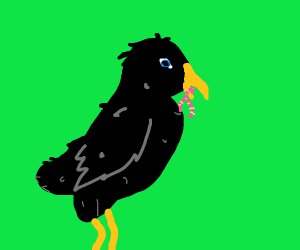 crow eating a worm
