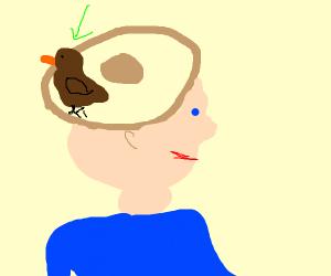 bird in hat