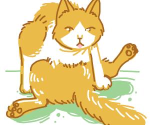 Cat doing the splits