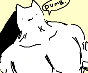 Muscular cat is angry at you