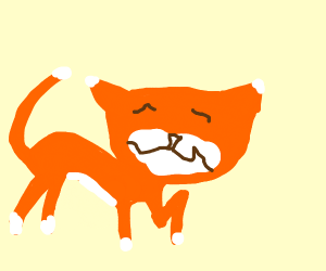 Smushy faced cat