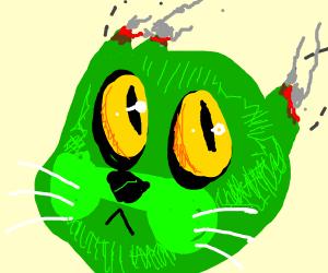 Green cats ears burned off