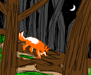 Fox in a forest at night