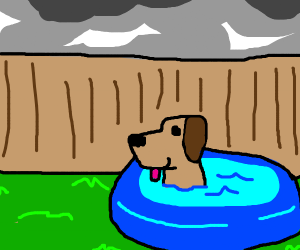 dog in small pool but not too small
