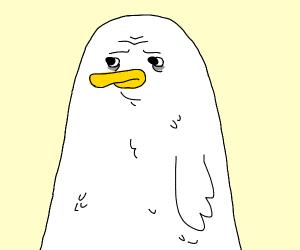 A Duck!